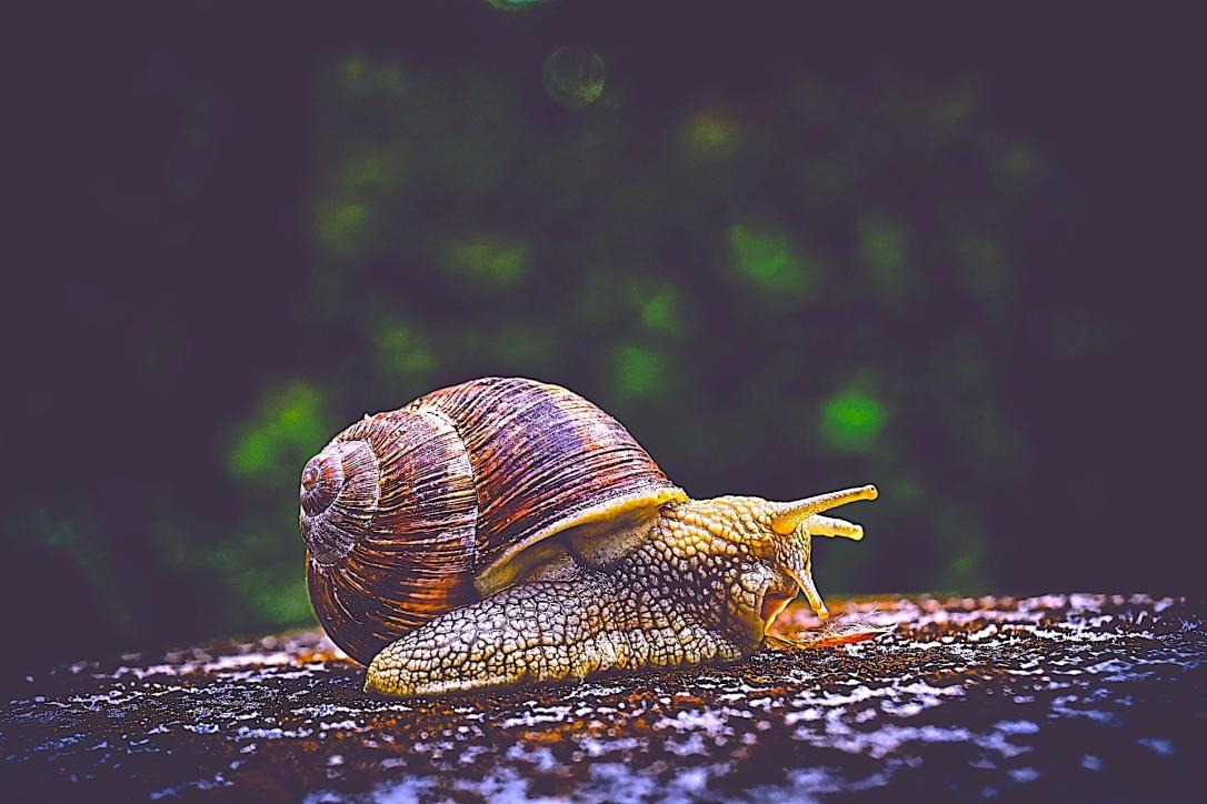 snail-3705324_1920